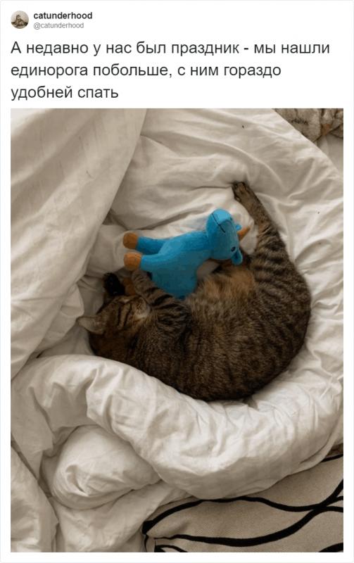 Парень рассказал, каково это жить со слепым котом (18фото)