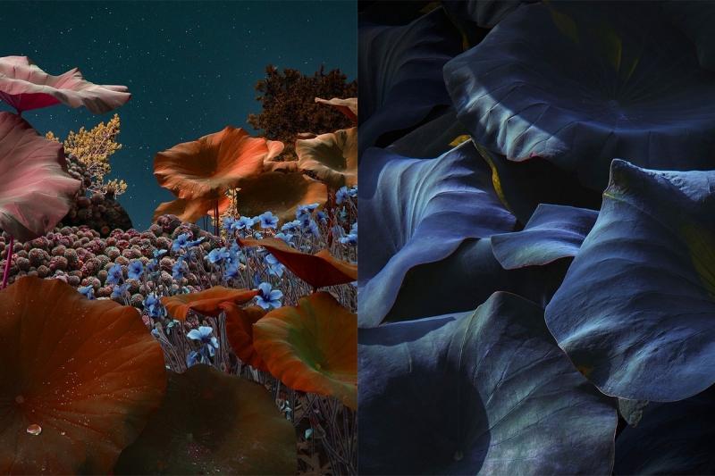 «Астроботанические» снимки Линды Вестин - «Хорошее настроение»
