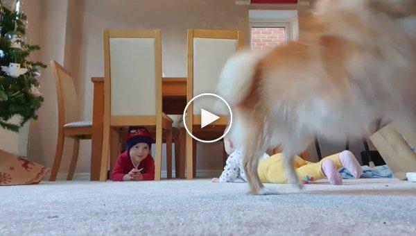Хитрый пёс нарушил детскую фотосессию