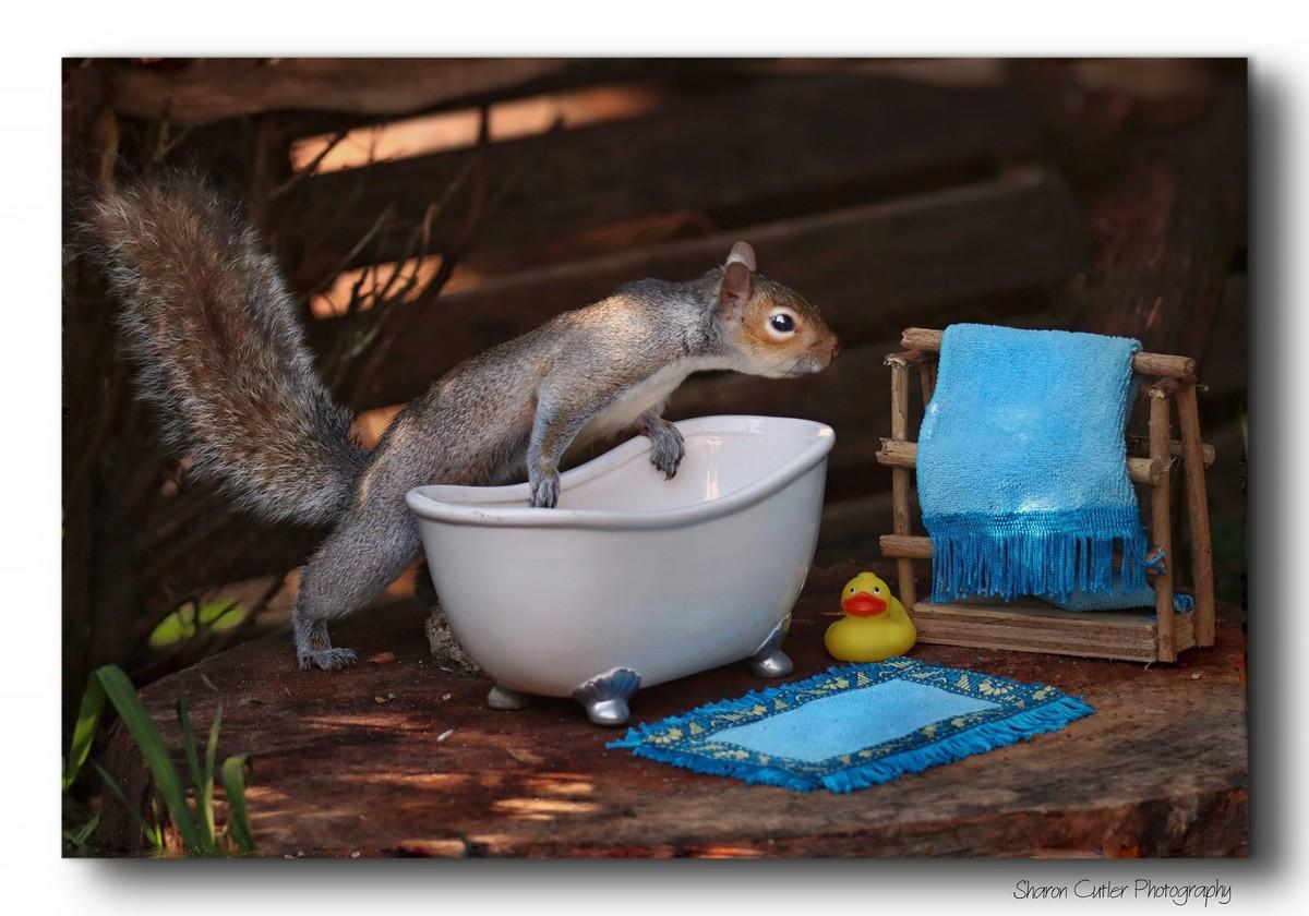 Симпатичные белки на снимках Шарон Катлер - «Хорошее настроение»