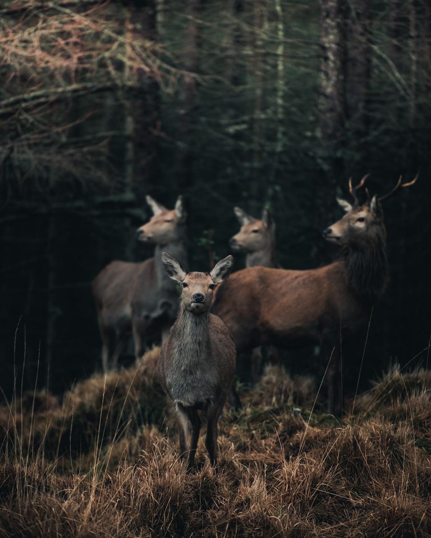 Замечательные портреты диких животных Конста Пункка - «Хорошее настроение»