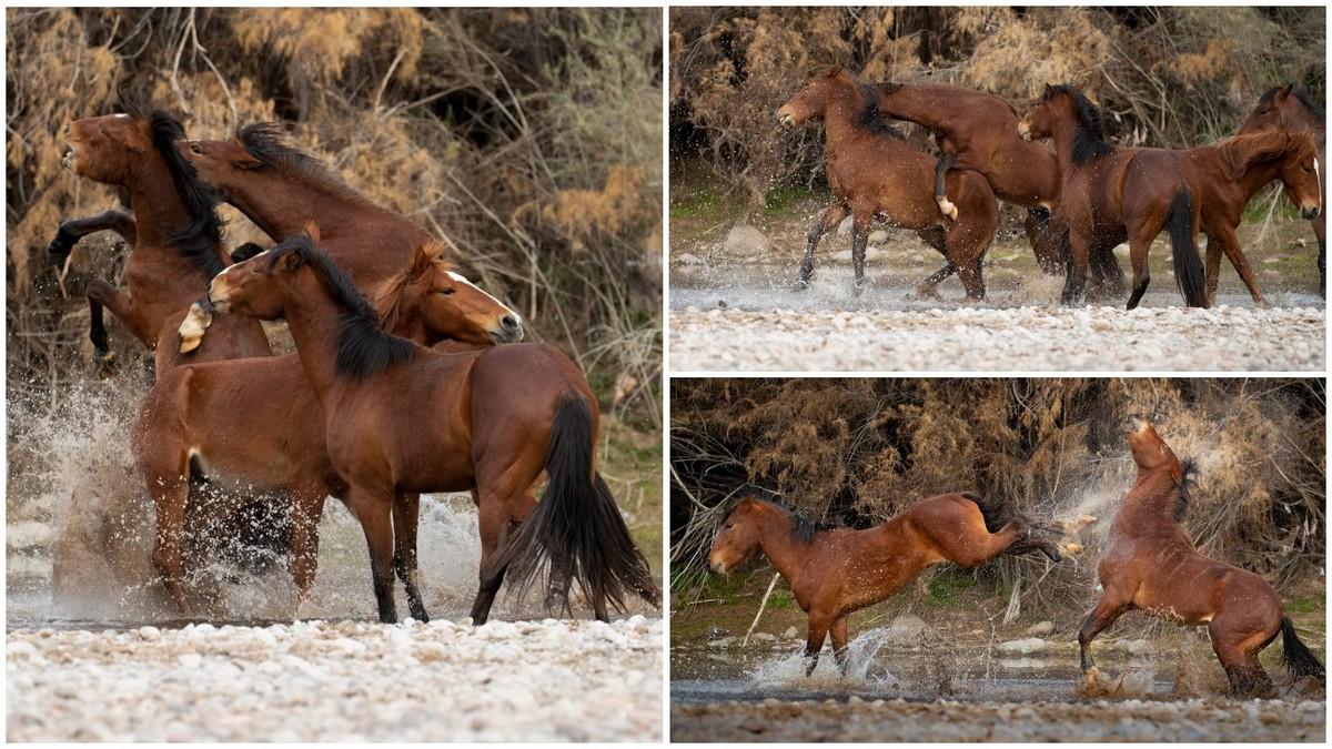 Впечатляющие кадры взаимоотношений диких лошадей - «Хорошее настроение»