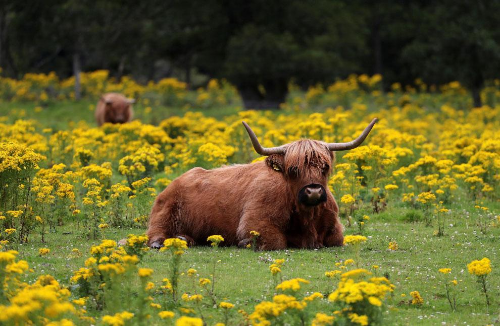 Животные в фотографиях - «Фото»