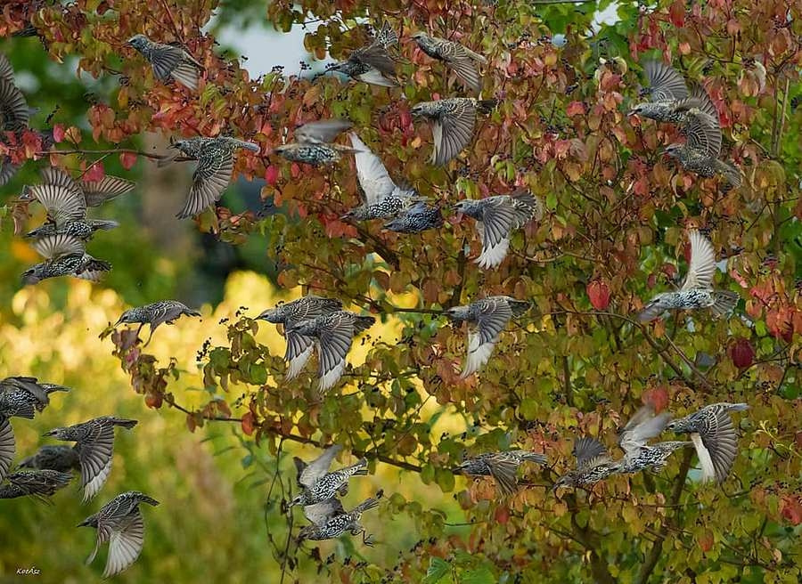 Симпатичные птички на снимках Kotics Zsolt - «Хорошее настроение»