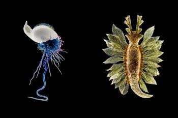 Удивительные портреты морских беспозвоночных