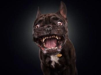 Смешные собаки ловят лакомство (30 фото) - «Хорошее настроение»