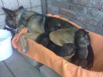 Зоозащитница спасла собаку, поселившуюся на могиле умершего хозяина (8 фото) - «Хорошее настроение»