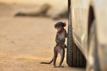 Конкурс фотографий животных от лондонского зоопарка (12 фото) - «Хорошее настроение»