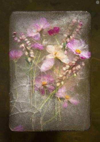 Цветы во льду (15 фото) - «Хорошее настроение»