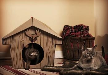 Картонные домики для кошек (6 фото) - «Хорошее настроение»