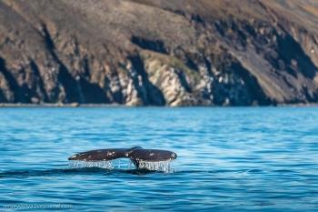 Китовая аллея на Чукотке (23 фото) - «Хорошее настроение»