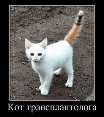 Кот трансплантолога - «Хорошее настроение»