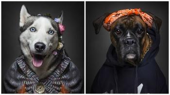 Если бы собаки были людьми ! - «Фото»