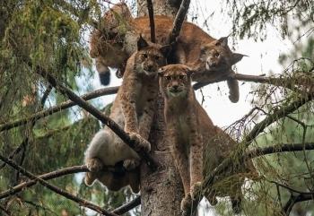 Эти забавные животные - 922 (50 фото)