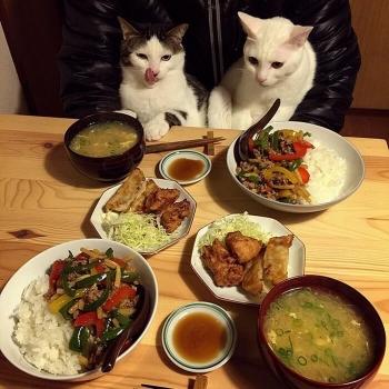 Любопытные дегустаторы: забавные реакции двух кошек на еду хозяев (17фото)
