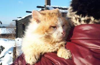На Урале кот полтора года ждет погибших хозяев на пепелище (2фото)