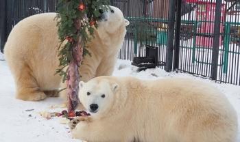 Новогоднее настроение в красноярском зоопарке - «Хорошее настроение»