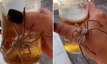 Огромный паук решил отобрать у человека холодное пиво (3фото+1видео)