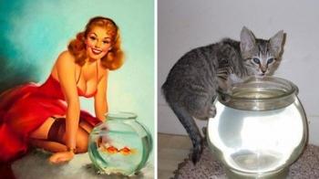 Пин-ап-девушки против кошек в борьбе за вашу любовь