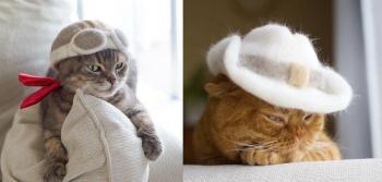 Японский фотограф нашел самое правильное применение кошачьей шерсти! (33фото)