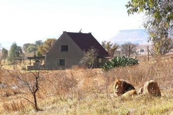 Южноафриканский заповедник сдает дом с 70 львами по соседству (13фото+1видео)