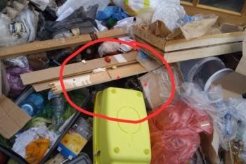 """Необычная """"находка"""" в мусорном контейнере в Москве - «Хорошее настроение»"""