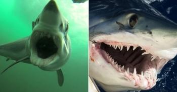Останки огромной акулы удивили австралийского рыбака - «Хорошее настроение»