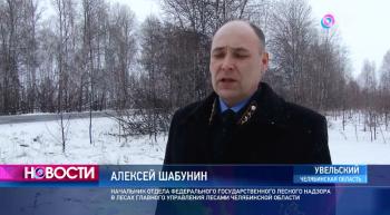В Челябинских лесах ищут нелегальных сборщиков валежника (1фото)