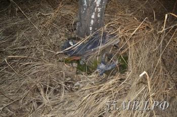 В Омской области нашли человеческий скелет, привязанный к дереву (2фото)