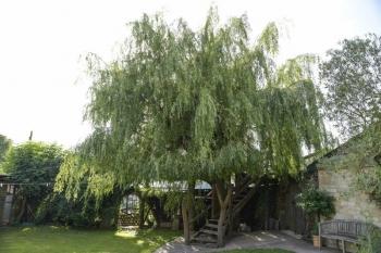 Дедушка решил спилить дерево в саду, но вид оттуда оказался так хорош, что он построил на нём домик (10фото)