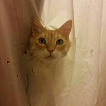 Обожающий воду кот много раз рвал шторки в ванной и хозяйка, смирившись, начала дополнять дырки рисункам (15фото)
