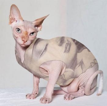 Тату-одежда для крутых котэ