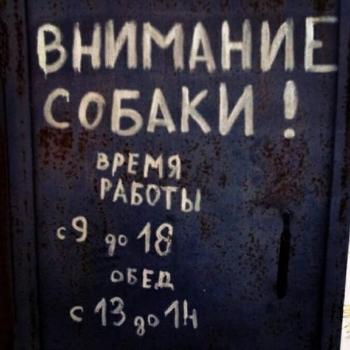 Загонные объявления (12 фото)
