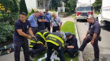 Американские пожарные с помощью мыла и укола спасли застрявшего в ливневке енота (10фото)