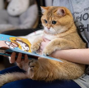 Фотожабы на позитивного кота по кличке Хосико (19 фото)