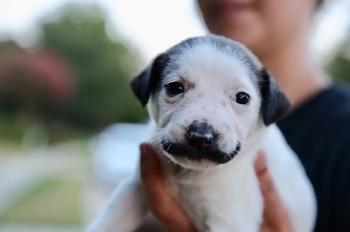 Сальвадор Долли - щенок, который кого-то очень напоминает - «Хорошее настроение»