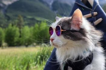 Кот-путешественник из Канады (20 фото)