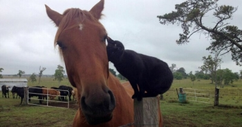 История необыкновенной дружбы кота Морриса и коня Чемпи (20фото+1видео)