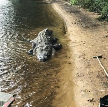 Огромный аллигатор из штата Джорджия (9 фото)
