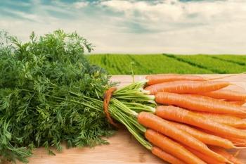 Почему морковь оранжевая? Всё дело в политике