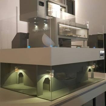 Дизайнеры из Южной Кореи строят элитные особняки для хомяков - «Хорошее настроение»