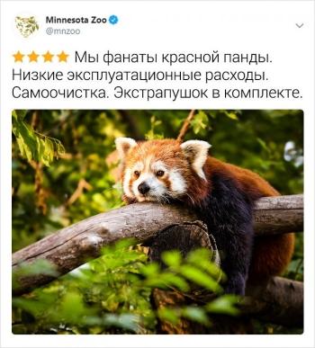 Флешмоб с отзывами о животных (14 фото)