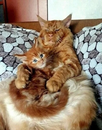 Фотографии из семейных альбомов котов - «Хорошее настроение»