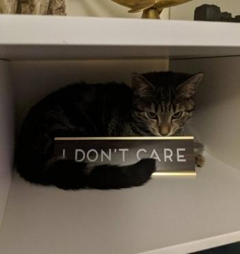 Когда кот в доме хозяин (16 фото)