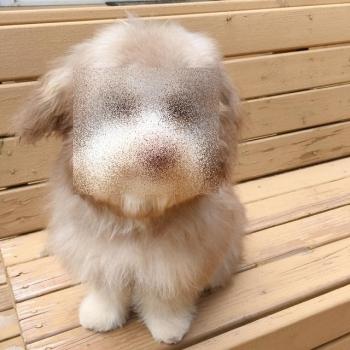 Нори - пес с абсолютно человеческой мордой - «Хорошее настроение»