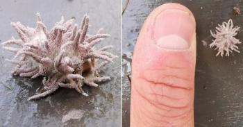 Опасный грибок превратил шмеля в зомби (4 фото)