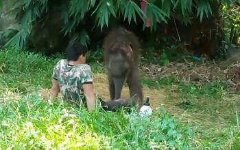 Стадо отвергло слоненка, спасенного из болота. Но его не бросили (2 фото + видео)