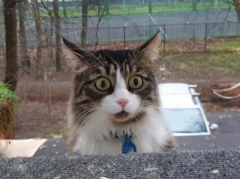 Котовсячина - «Хорошее настроение»