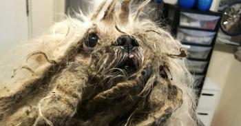 Люди нашли на улице заросшую собаку, которая едва могла двигаться (6фото)