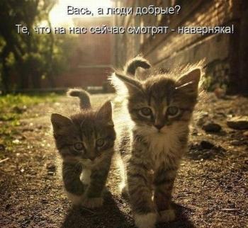 Без кота и жизнь не та - «Хорошее настроение»